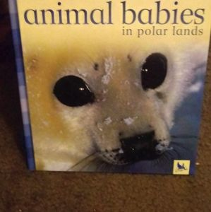 Animal Babies in Polar Lands/1st Aid Tips Parents
